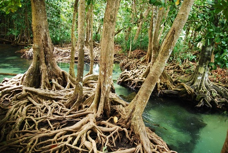 Khlong Song Nam clear tropical stream, Krabi, Thailand Stock Photo - 13570812