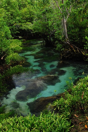 Khlong Song Nam clear tropical stream, Krabi, Thailand photo