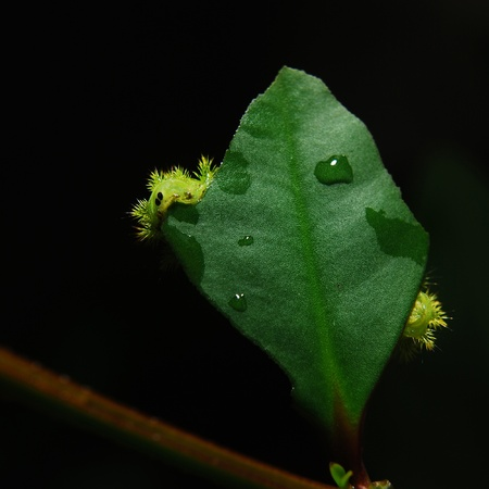 Caterpillar on a leaf photo