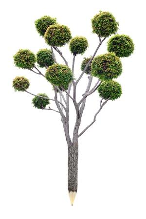 Crayon de matériaux en bois avec des feuilles fraîches concept de planète verte Banque d'images