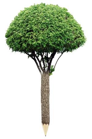 educacion ambiental: Lápiz de material de madera con hojas frescas concepto de planeta verde Foto de archivo