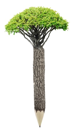 Pencil of wood material with fresh leaves  Green planet concept