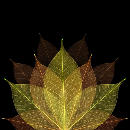 Skeleton leaf abstract background Stock Photo - 14809366