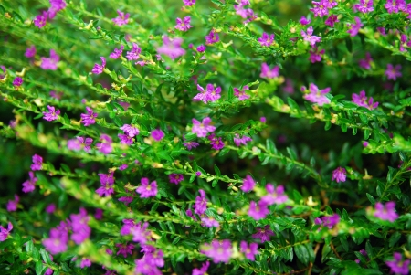 Beautiful pink flowers in garden Stock Photo - 15686968