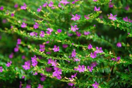 Beautiful pink flowers in garden Stock Photo - 15867984