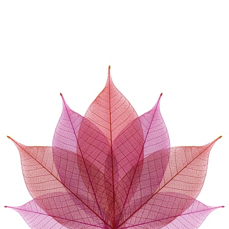 Skeleton leaf abstract background Stock Photo - 15780349