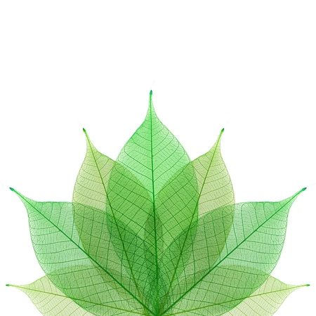 infirm: Skeleton leaf abstract background Stock Photo