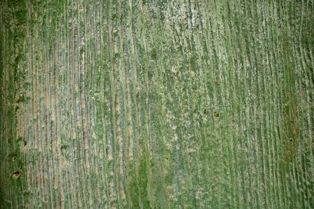 vieux fond de bois, la couleur verte