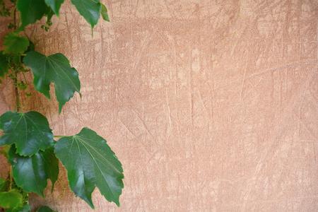 mur de ciment vieux avec des feuilles vertes