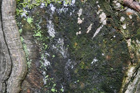 ?orce d'arbre de texture