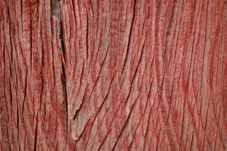 old wood: Old wood texture background