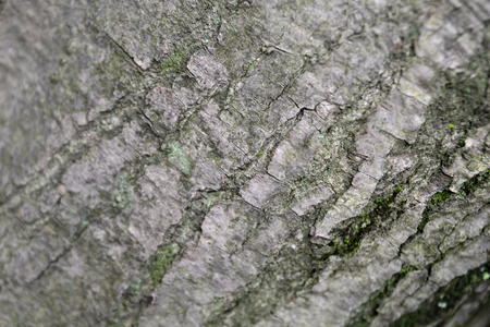 Bark of tree texture Banque d'images