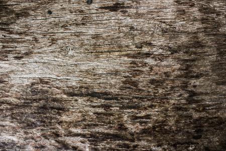texture ': Wood texture Stock Photo