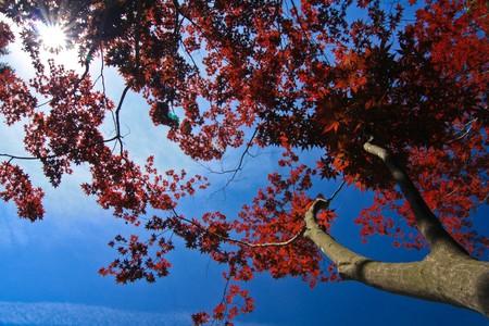 Autumn  leaf  in Korea. photo