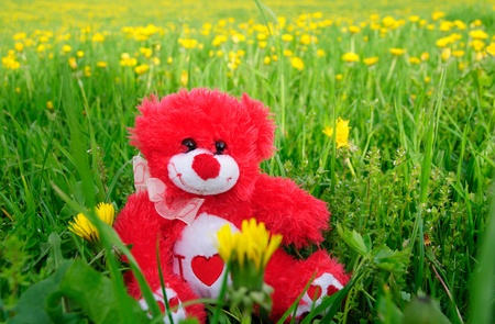 greenfield: red teddy bear on on greenfield