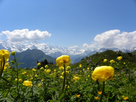 alps: mountain panorama from Schynige Platte, switzerland Stock Photo