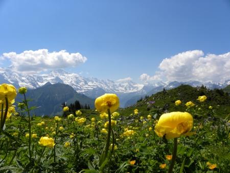 prato montagna: panorama dalla montagna Schynige Platte, svizzera Archivio Fotografico