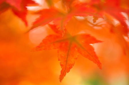 autumn color  photo