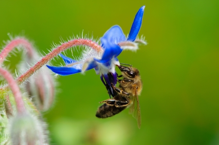 A bee  drinking nectar from the flower Stock Photo - 14391197