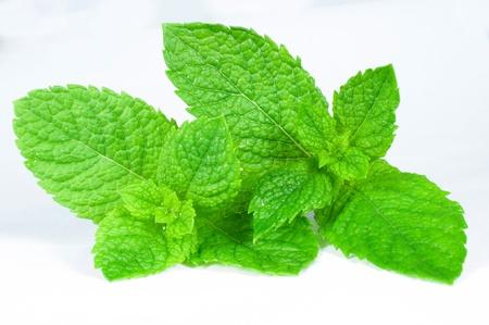 fresh mint photo