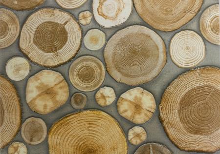 crosscut: Tiles stump wood seamless pattern Stock Photo