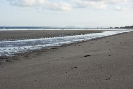 Seagulls at the beach after low tide going out. Stock Photo