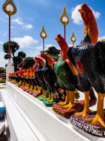 Chickens model photo