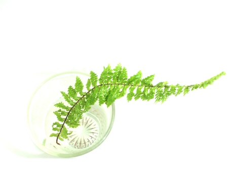 fern in glass isolated photo