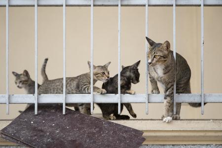 gray cat: cat family