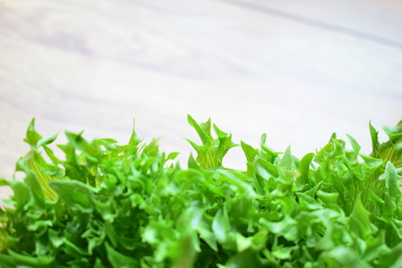 Organic hydroponic vegetable of frilly iceberg.