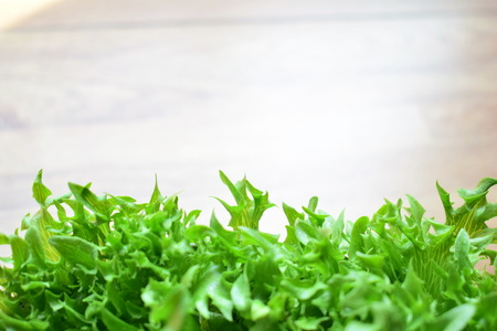 Green frillies iceberg lettuce.No toxic residue.
