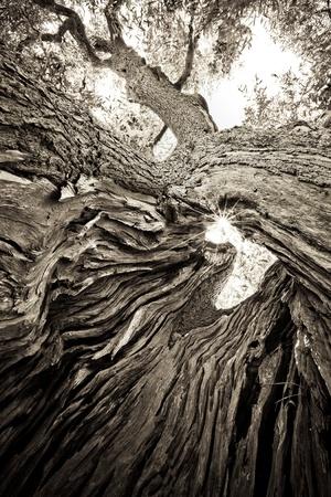 bomen zwart wit: zwarte en witte boom met zon