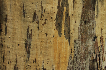 Horizontal natural wooden background. Fragment of the surface of a thick willow tree trunk