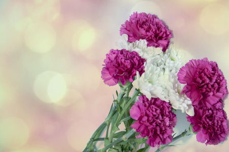 Romantic horizontal floral banner. White beautiful chrysanthemums and pink carnation Reklamní fotografie