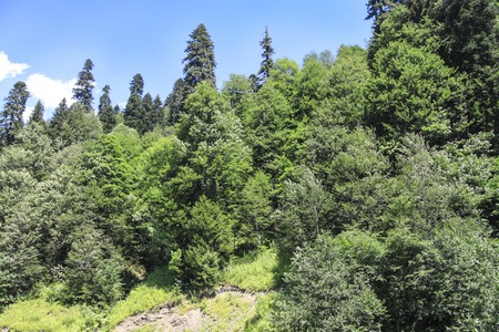 Panorama tourism in the summer. Blue sky and trees.