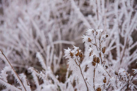 Winter pastel landscape foggy day. Frosty grasses in the park. White crystals of snow Banco de Imagens