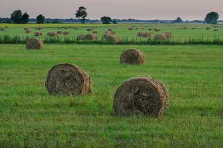 Hay in the field Stock Photo