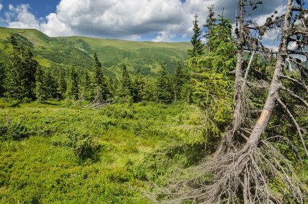 Carpathian Mountains in Ukraine photo