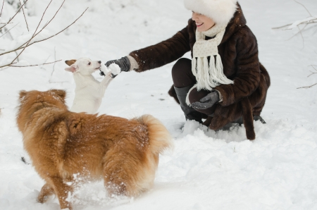 Young woman playing with dogs in the snow photo
