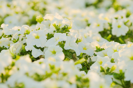 Flowers in the garden in Dubai, United Arab Emirates