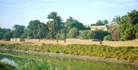 the nile: Egypt. Oasis next to the channel of Nile river