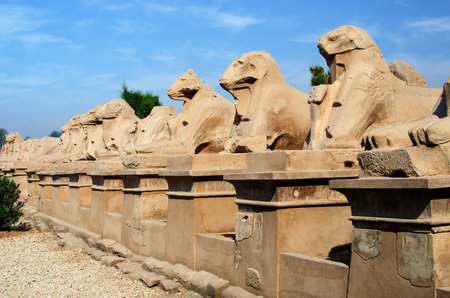 thebes: Avenue of ram-headed sphinxes in Precinct of Amun-Re  (Karnak Temple Complex, Luxor, Egypt)