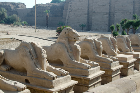 precinct: Avenue of ram-headed sphinxes in the Precinct of Amun-Re  (Karnak Temple Complex, Luxor, Egypt)