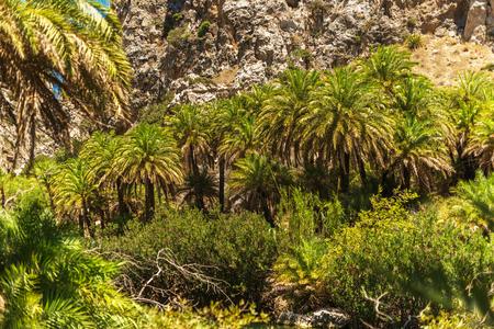 torrid: Crete, Greece: forest in Palm Bay, famous touristic destination
