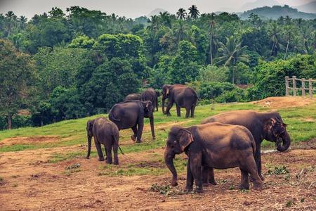 captive: captive elephants