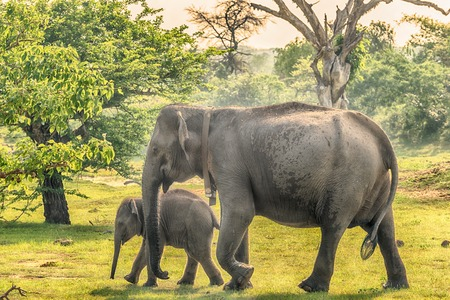 Sri Lanka: wilde olifanten in de jungle, Yala National Park Stockfoto