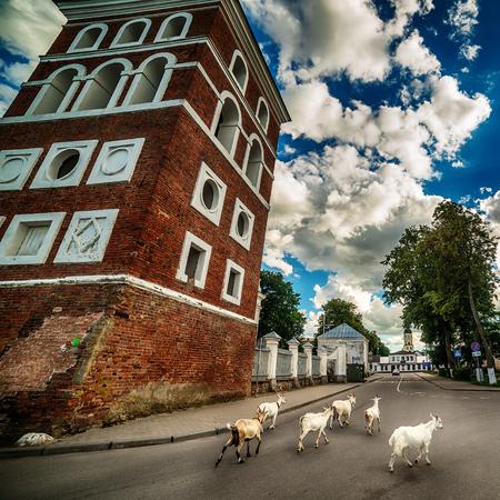 Belarus: sheep next to The Corpus Christi Catholic Church of Niasvish, Nesvizh, Nesvyzius, Nieswiezu in the summer