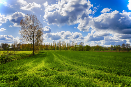 Spring landscape in Belgium. Green field under a blue sky with clouds. 免版税图像