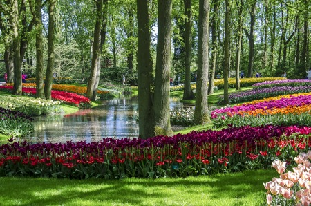 holland landscape: Landscape in the park tulips in Holland,