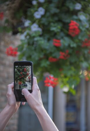 The hand of the person taking the picture of flowers on the smartphone. Zdjęcie Seryjne